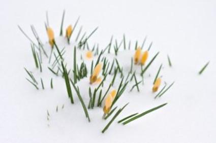 Spring Hopes Eternal