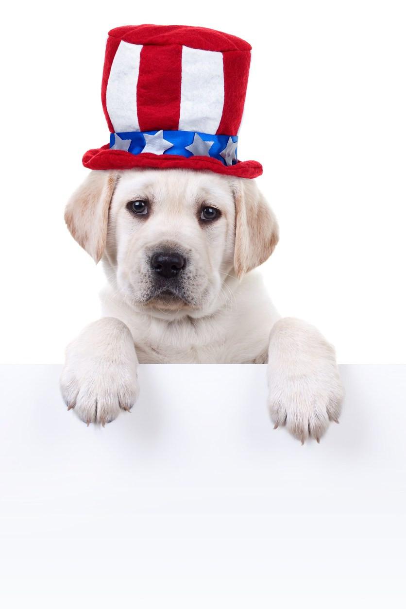 Patriotic Puppy Dog Sign