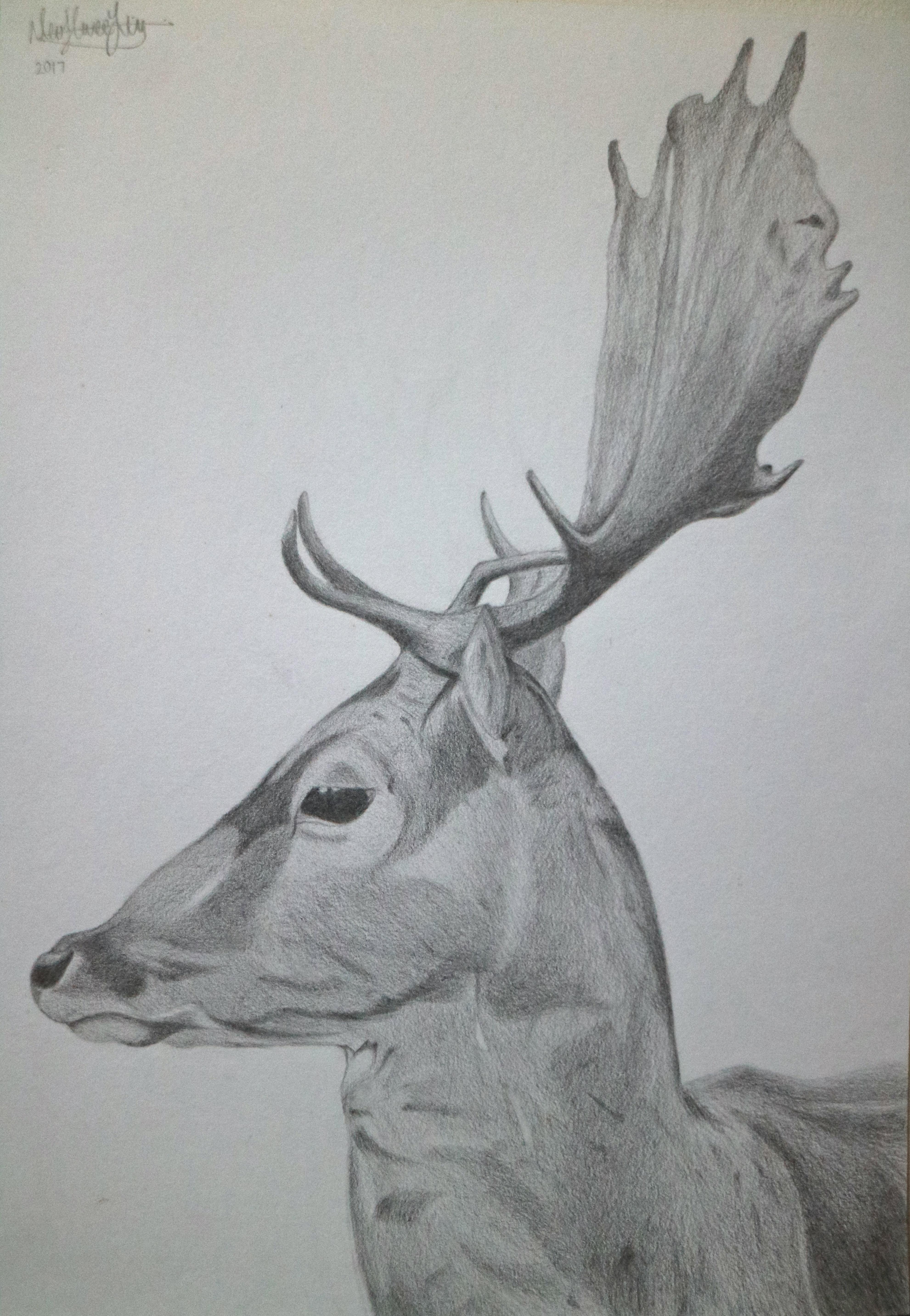 TWS Deer
