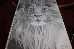 TWS Lion
