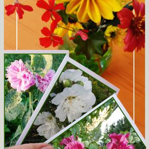 Karten-Trilogie von Stockrosen an einem Blumen-Arrangement