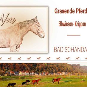 Pferde auf den Elbwiesen in Krippen