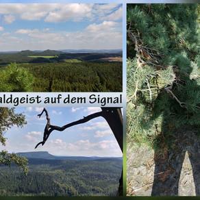 Auf dem Weg zum Spitzstein - Der Waldgeist auf dem Signal