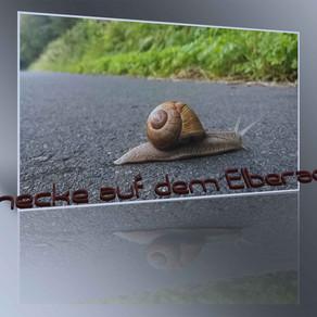 Schnecke auf dem Elberadweg