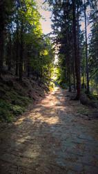 Stille im Tschechischen Wald