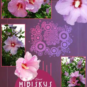 Hibiskus - Eibisch