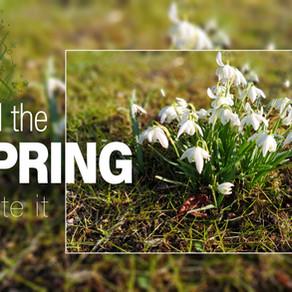 Frühling im Elbsandsteingebirge
