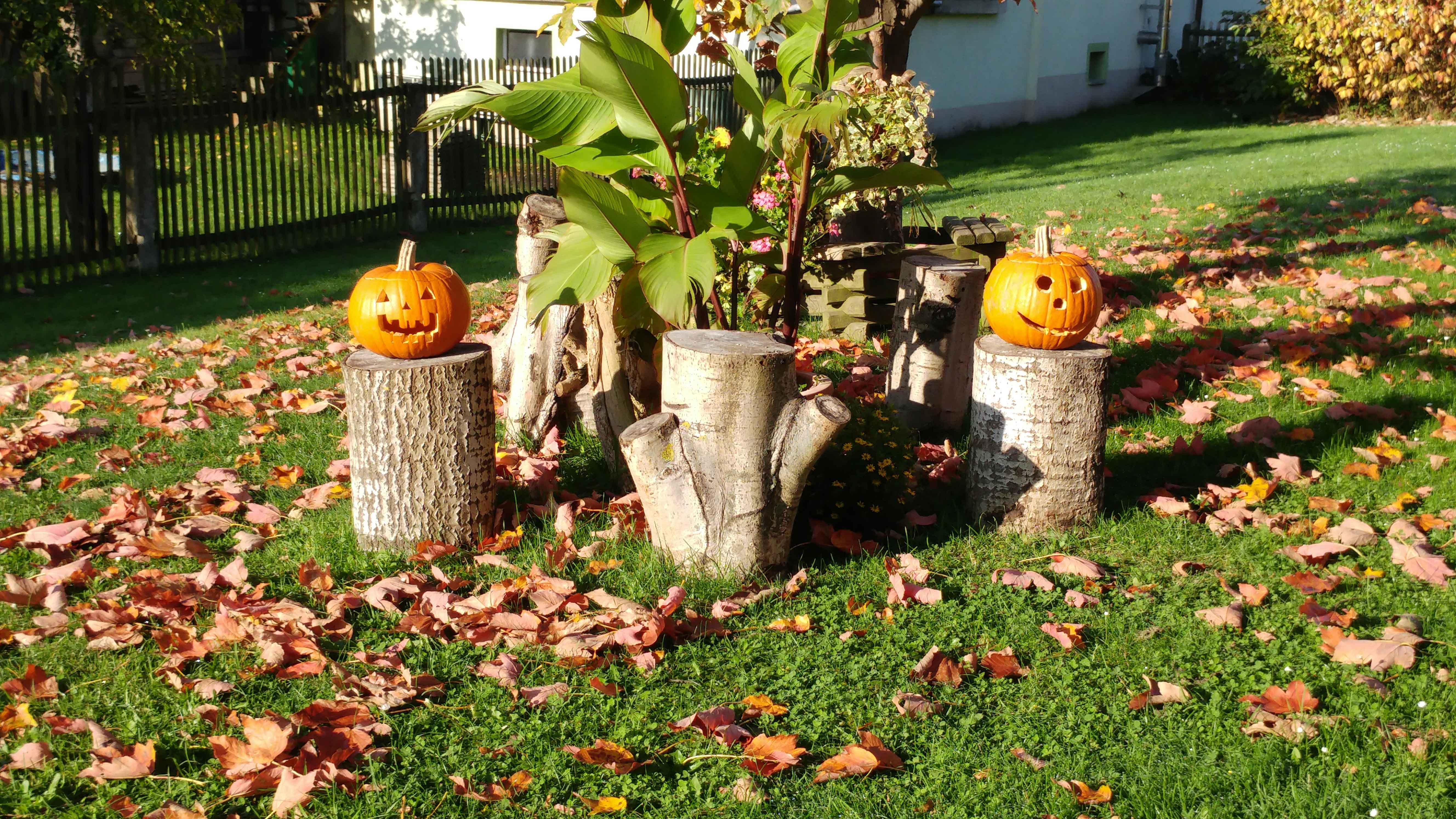 Herbstdeko in der Elbaussicht