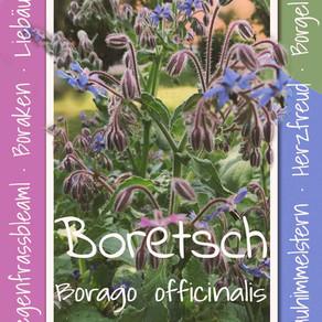 Boretsch Im Garten der Elbaussicht - Krippen