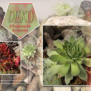 Neues Pflanzenarrangement in der Elbaussicht - Krippen