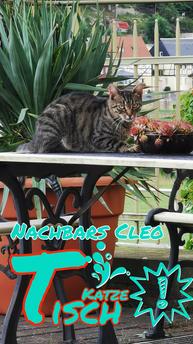 Nachbars Katze Cleo