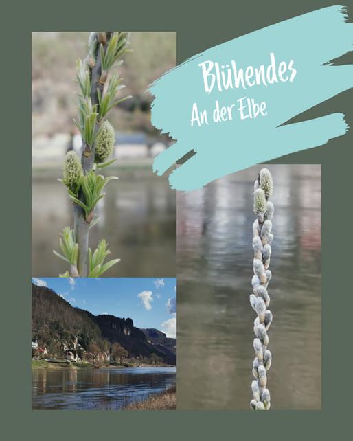 BlühendesAnder Elbe