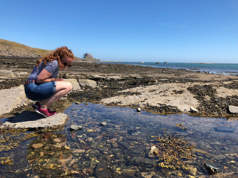 Rockpooling on Holy Island