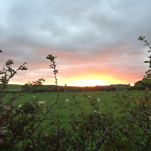 Sunset with Sheep.JPG
