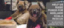 Koala Fund Raiser5.jpg