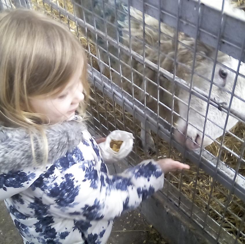 Easterside Farm Trip (2)