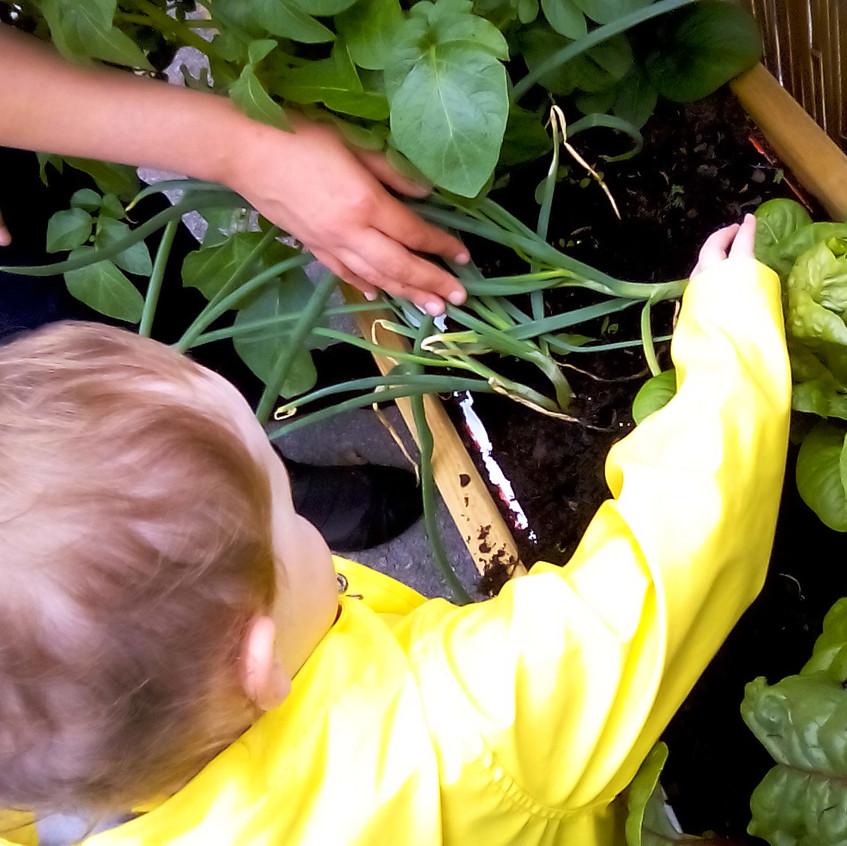Rosedene Nurseries Darlington Healthy Eating Week (1)
