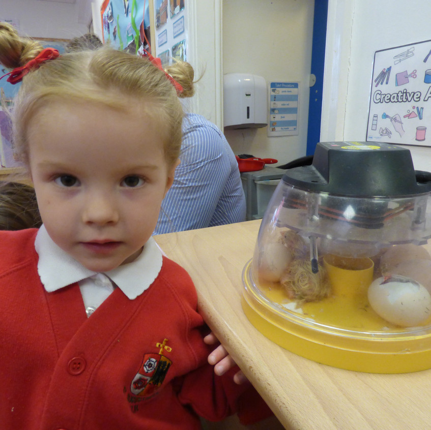 Rosedene Hemlington Initiative Centre Chickens (4)