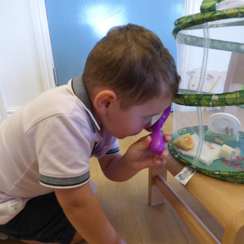Rosedene Hemlington Initiative Centre Butterfly life (17)