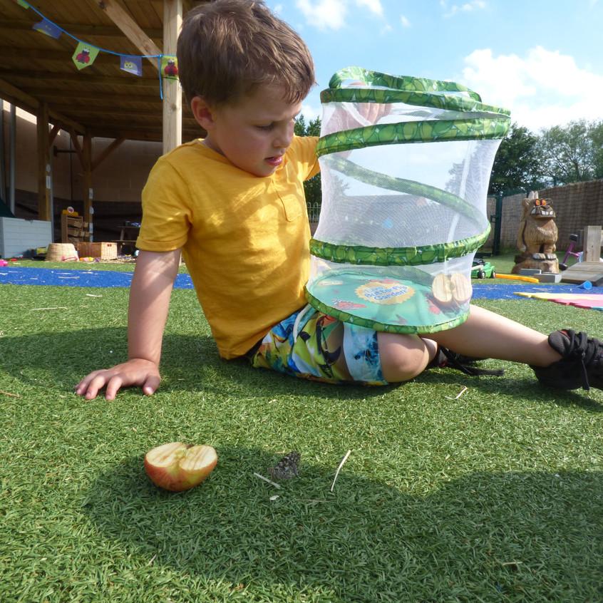 Rosedene Hemlington Initiative Centre Butterfly (1)