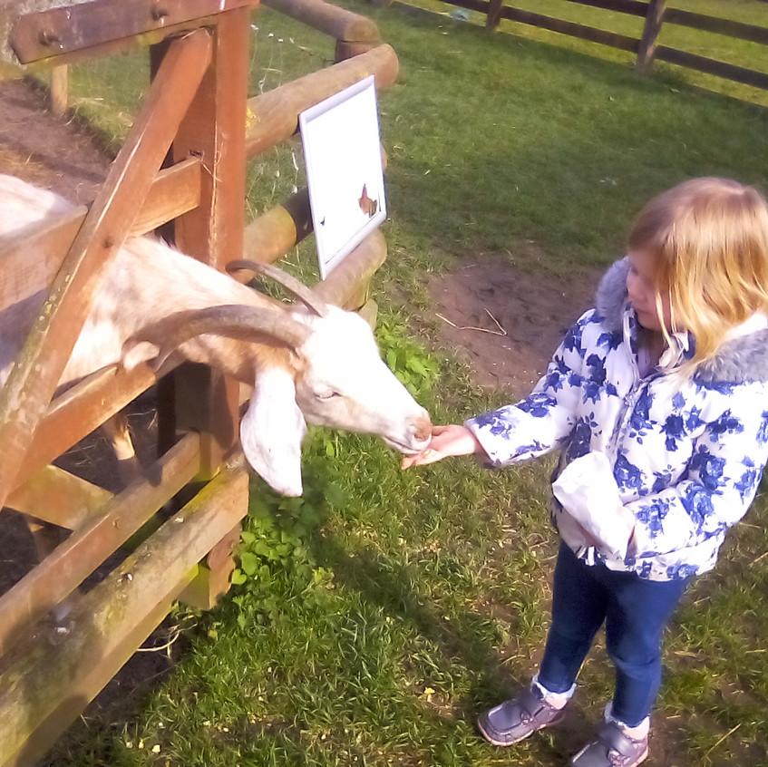 Easterside Farm Trip (7)