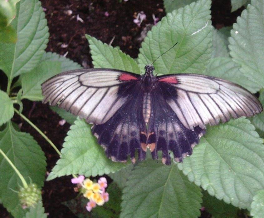 St Pauls Butterfly World Trip (9)