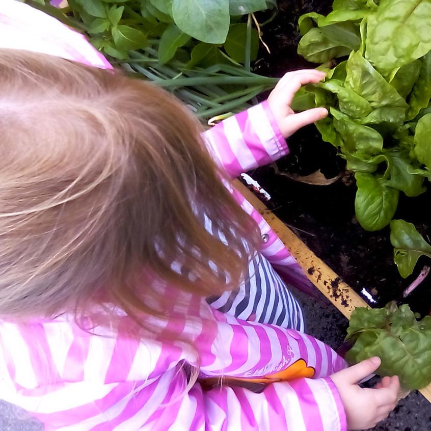 Rosedene Nurseries Darlington Healthy Eating Week (2)