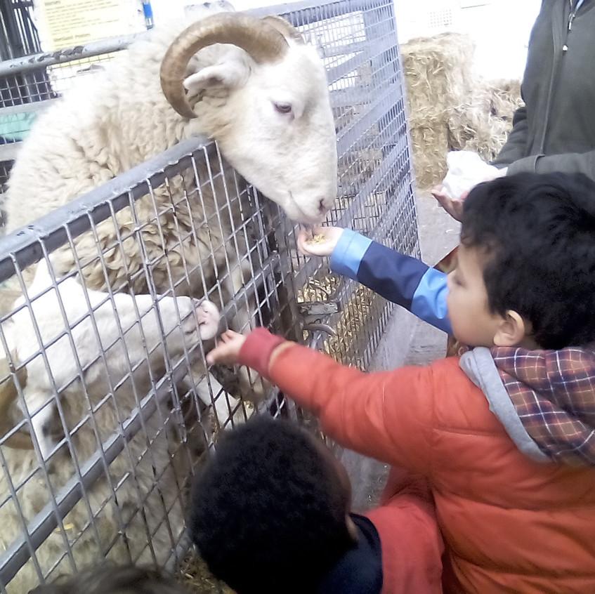 Easterside Farm Trip (15)