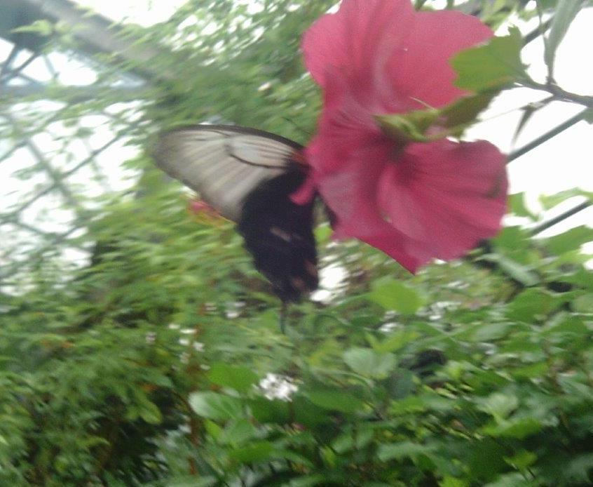 St Pauls Butterfly World Trip (3)