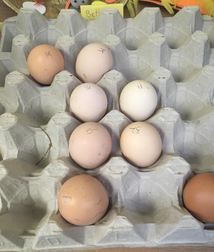 Rosedene Hemlington Initiative Centre Chickens pics (1)