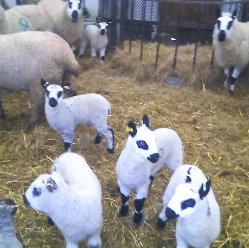 Easterside Farm Trip (4)
