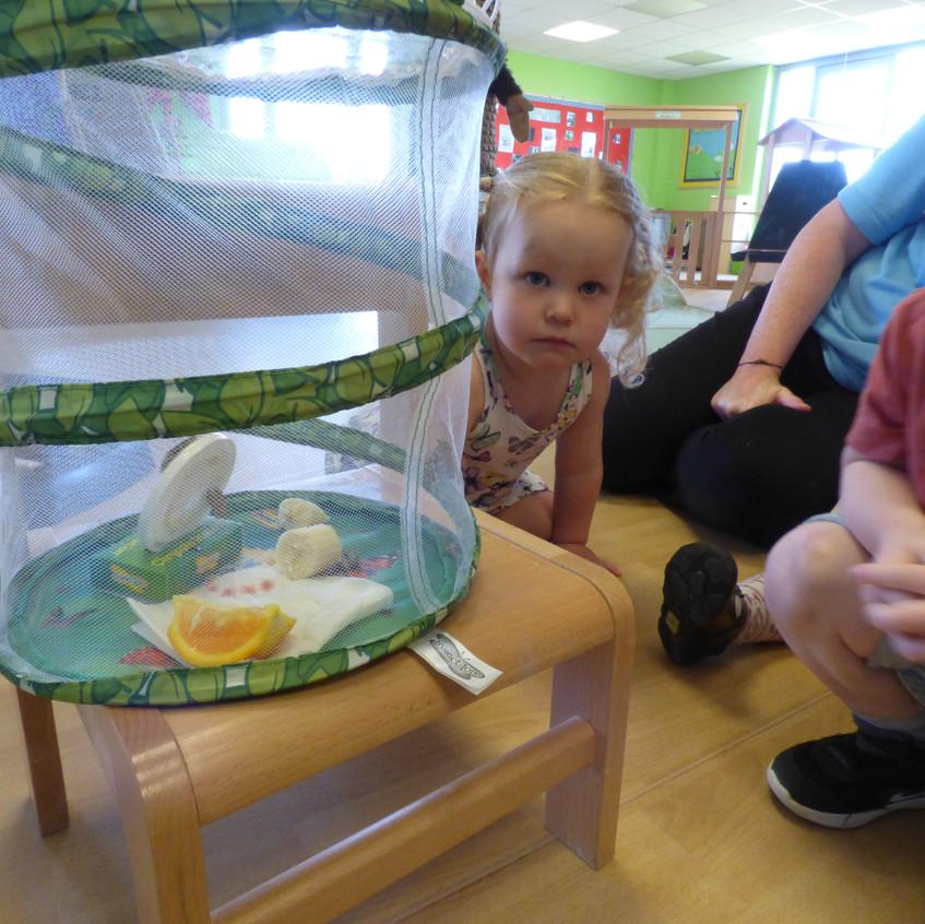 Rosedene Hemlington Initiative Centre Butterfly life (9)