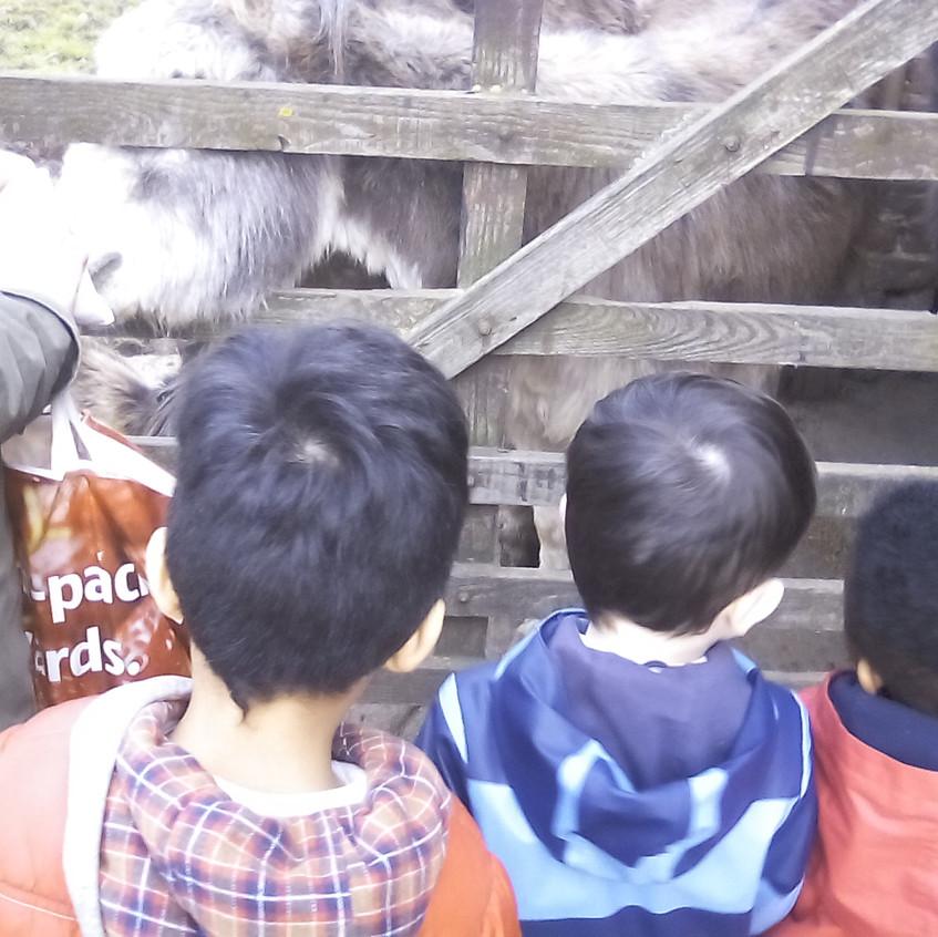 Easterside Farm Trip (13)