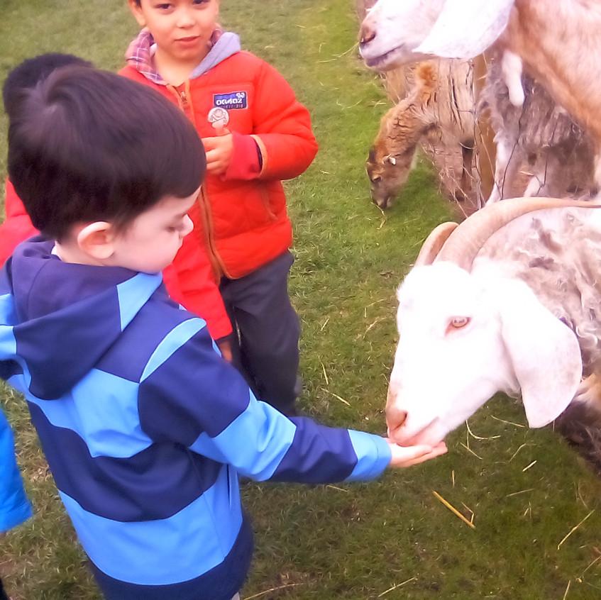 Easterside Farm Trip (18)