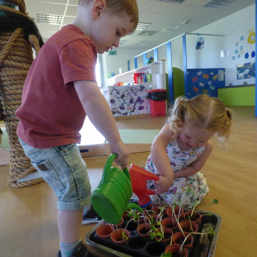 Rosedene Hemlington Initiative Centre Butterfly life (36)