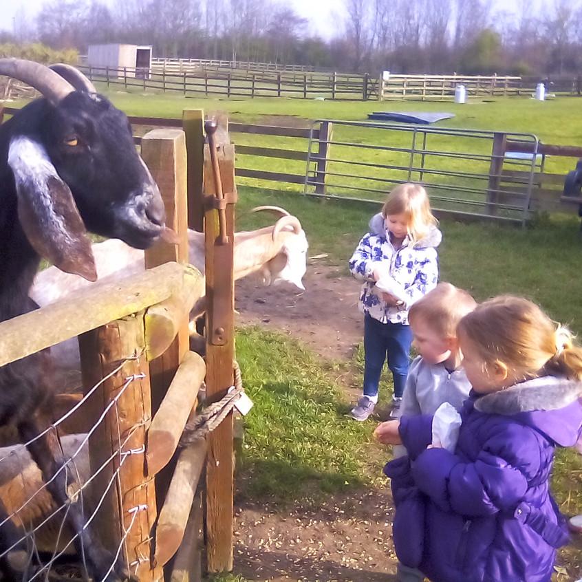 Easterside Farm Trip (6)