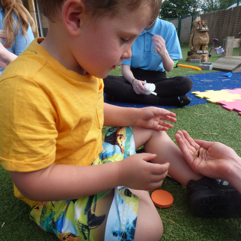 Rosedene Hemlington Initiative Centre Butterfly (10)