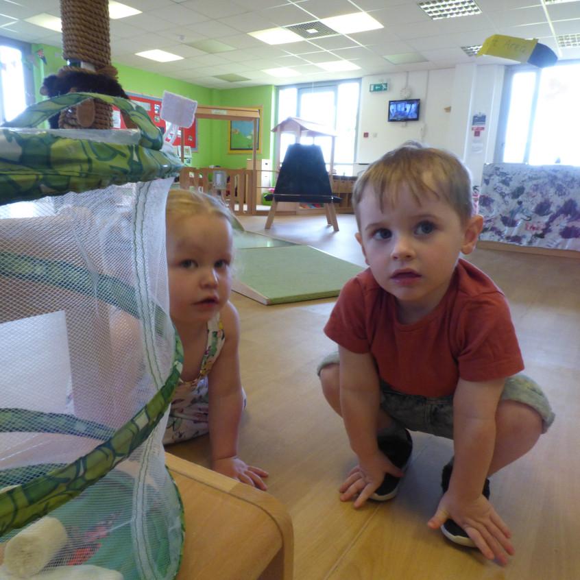 Rosedene Hemlington Initiative Centre Butterfly life (11)