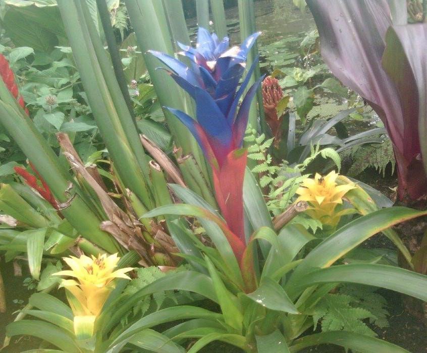 St Pauls Butterfly World Trip (7)