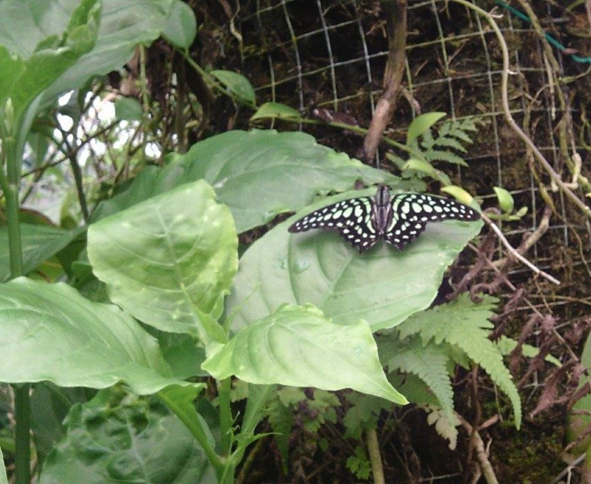 St Pauls Butterfly World Trip (5)