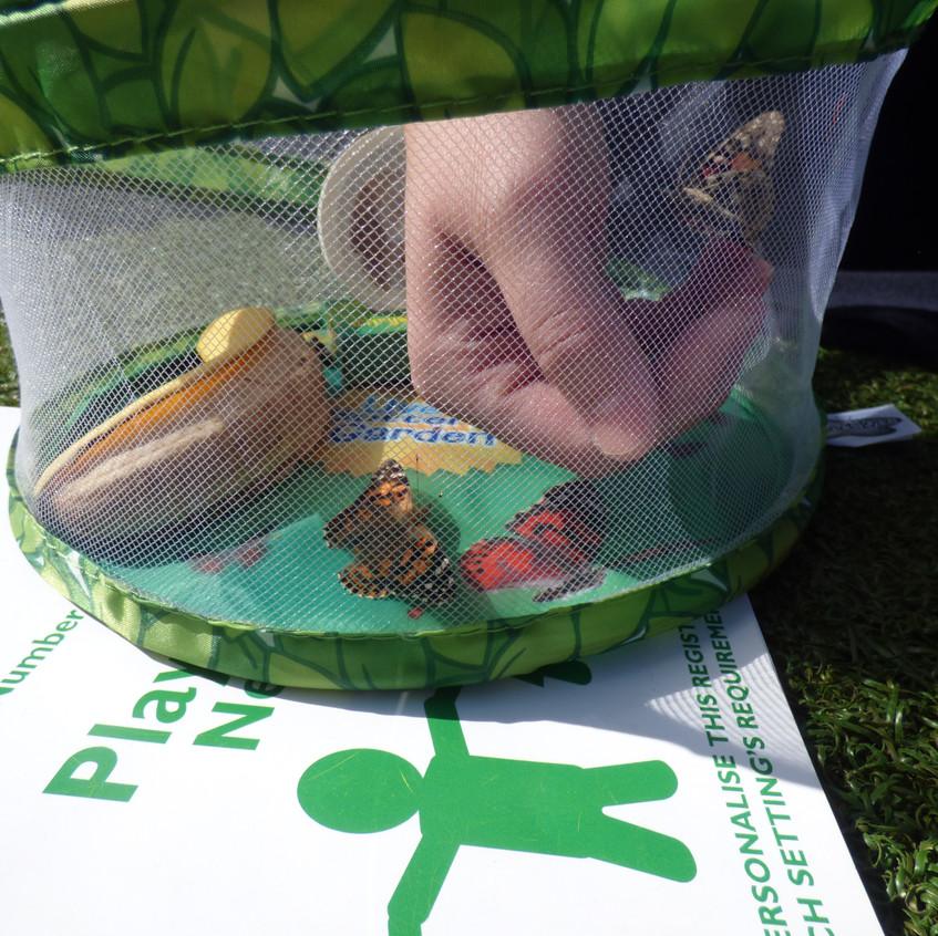 Butterfly Release - Rosedene Guisborough (4)