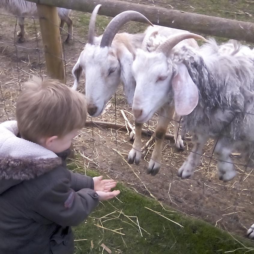 Easterside Farm Trip (19)