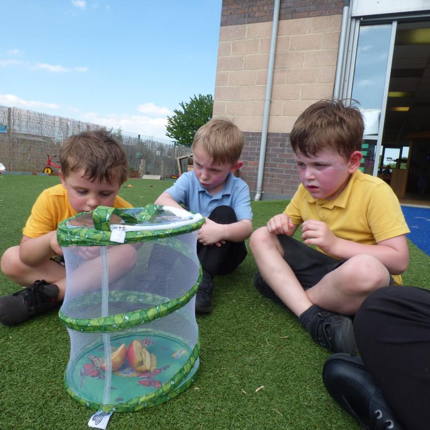 Rosedene Hemlington Initiative Centre Butterfly (2)