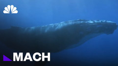 Can Drones Save Whales Trapped In Fishing Gear? | Mach | NBC News