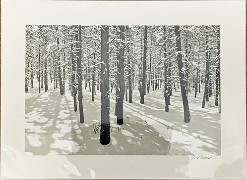 Malheur Trees in Snow, matted print