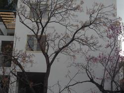 S House 06