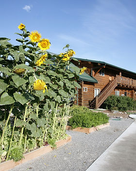 Elementary School and Sunflowers.jpg