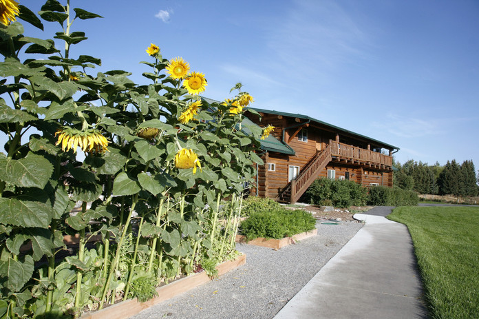 Elementary School and sunflower garden