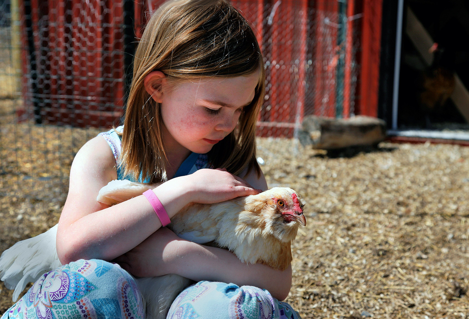 Olivia and a chicken