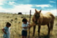 HH Horse.jpg